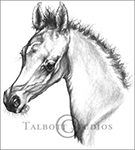 Portrait of M.T. Beau Monde, original graphite drawing of an Arabian colt by Eugenia Talbott