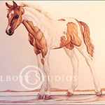 Portrait of Eve, original watercolor painting of a half Arab Pinto filly by Eugenia Talbott