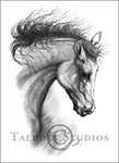 Portrait of M.T. Dubai, original graphite drawing of an Arabian horse by Eugenia Talbott