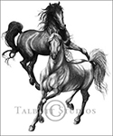 Arabian Stallions, original graphite drawing by Eugenia Talbott