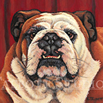 Portrait of a bulldog, oil painting by Eugenia Talbott