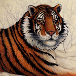Siberian Majesty, portrait of a Siberian tiger from the Cedarhill Animal Sanctuary, original oil painting by Eugenia Talbott