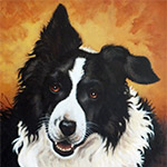 22 x 28 oil on canvas, portrait of a Border Collie, Willy