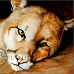 Portrait of Zack, oil painting of a mountain lion by Eugenia Talbott