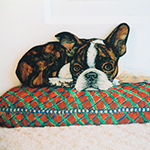 Free standing painting of a Boston Bulldog, painted on wood