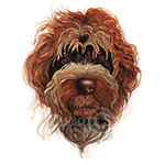 Watercolor portrait of a Wirehaired Pointing Griffon by Eugenia Talbott
